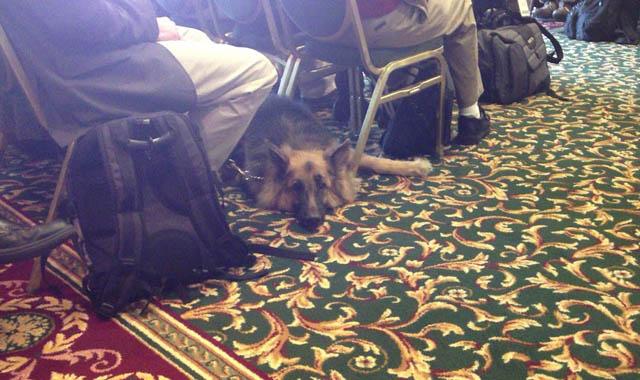 会議中はおとなしくいすの下で眠る盲導犬