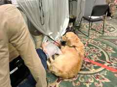 盲導犬に遊んでもらう少年