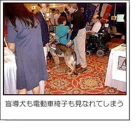 盲導犬も電動車椅子も見なれてしまう