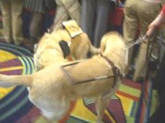 写真:いぬ、いぬ、犬・・・よく動くのでぶれてしまった・・