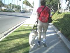 写真:2つのホテルの間を、人も犬も移動する