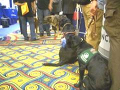 写真:見習い女官ならぬ、見習い介助犬は初々しい
