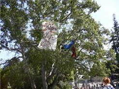 画像:木の上の人