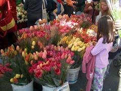 画像:色とりどりの花